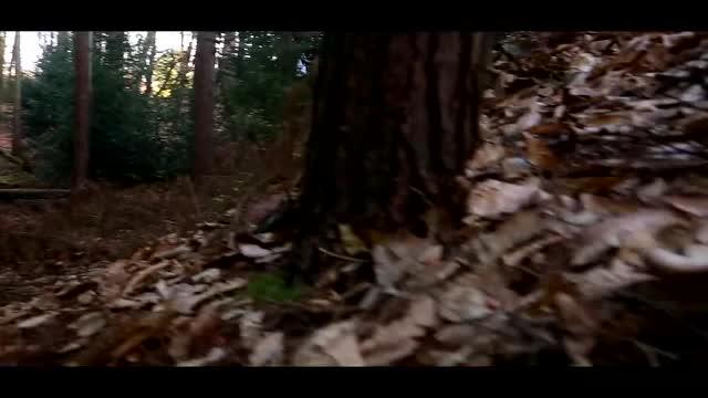 Antidote – филм